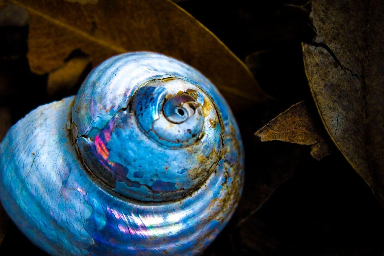 big-snail-shell