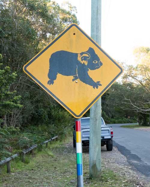 caution-koala-crossing-sign-hawks-nest