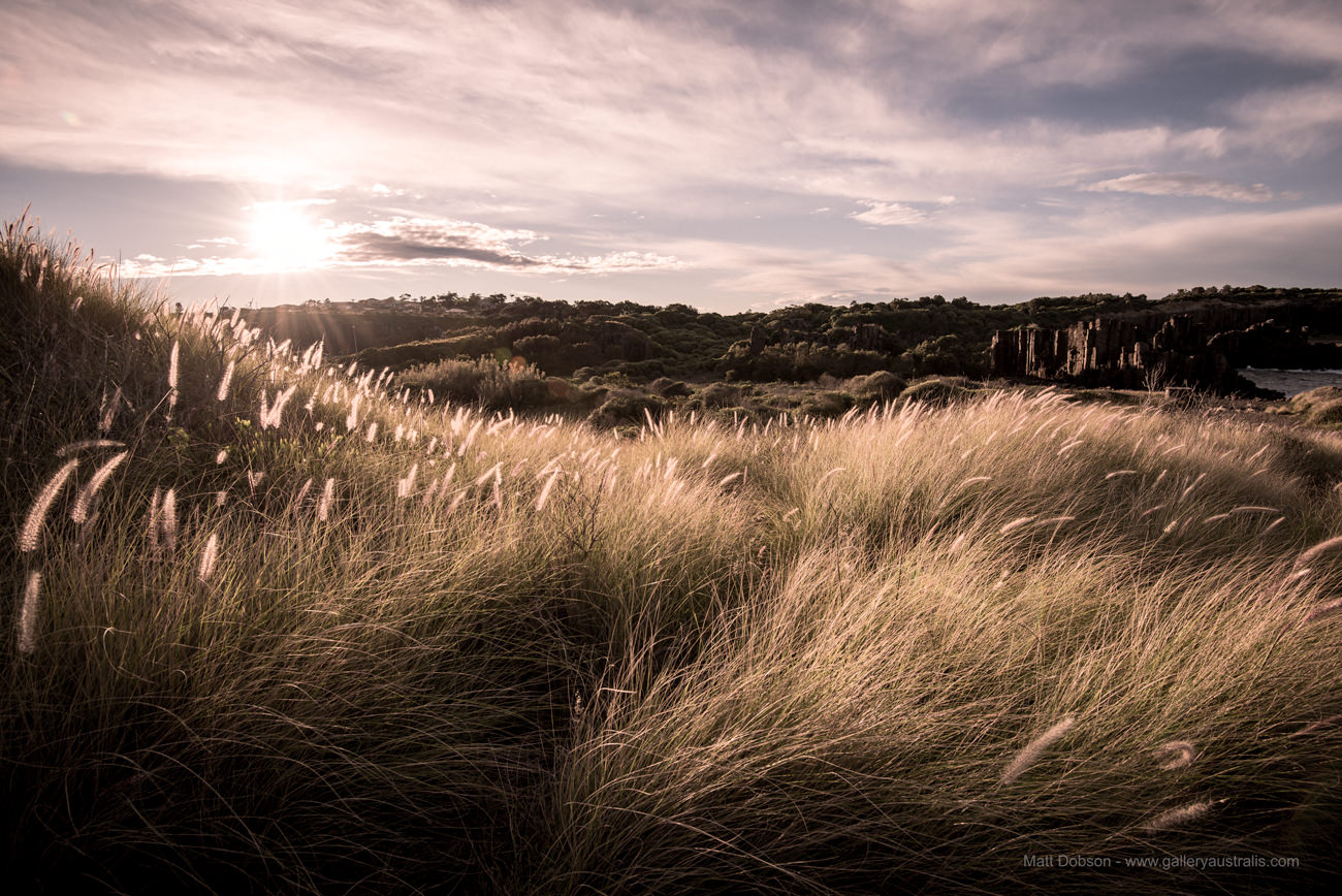 Through the grass at Bombo Quarry NSW